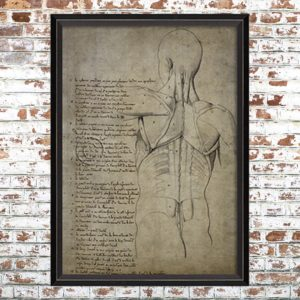 Framed Anatomical Torso Print 2