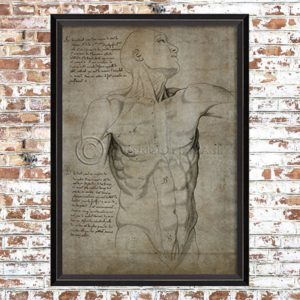 Framed Anatomical Torso Print