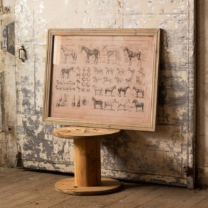 french equine anatomy chart framed under glass