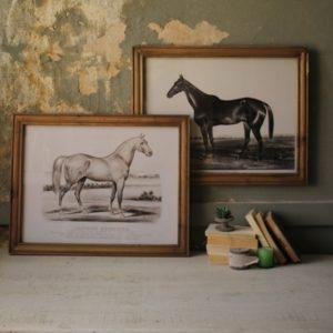 framed horse prints set of 2