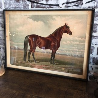 Prized Horse In Pasture Framed Print 1
