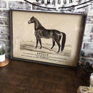 Famous Race Horse Framed Print- Apollo