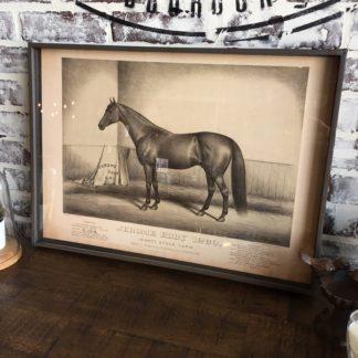 Famous Race Horse Framed Print- Jerome Eddy