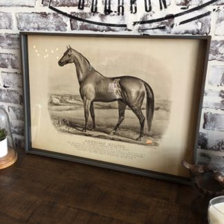 Famous Race Horse Framed Print- American Eclipse